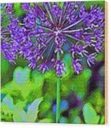 Purple Allium Flower Wood Print