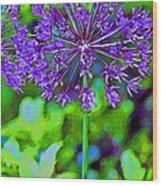 Purple Allium Flower Wood Print