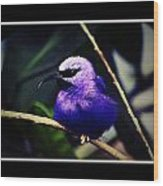 Purple And Blue Robin Wood Print