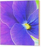 Purple And Blue Viola Wood Print
