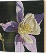 Purple And Cream Columbine Flower Wood Print