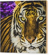 Purple And Gold Tiger Wood Print