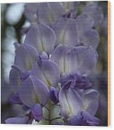 Purple And Violet Wisteria Blossom  Wood Print