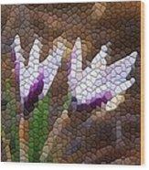 Purple And White Crocus Wood Print