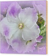 Purple And White Fancy African Violets Wood Print