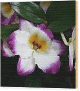Purple And White Flower At Biltmore Estate Wood Print