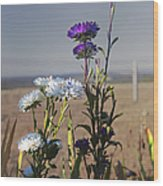 Purple And White Flowers In The Sun Wood Print