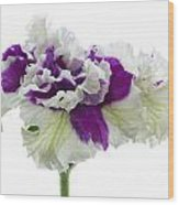 Purple And White Frilly Petunia Wood Print