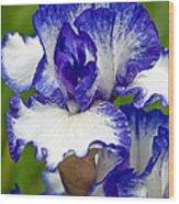 Purple And White Iris Wood Print
