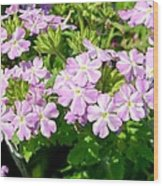 Purple And White Phlox Wood Print
