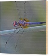 Purple And Yellow Dragonfly On Navarre Beach Wood Print