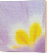 Purple And Yellow Primrose Petals - Bright And Soft Spring Flower Wood Print