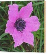 Purple Anemone - Anemone Coronaria Flower Wood Print