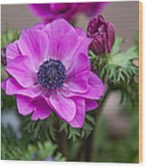 Purple Anemone. Flowers Of Holland Wood Print