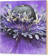 Purple Anemone Wood Print