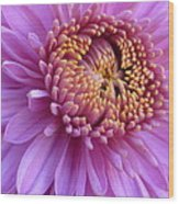 Purple Autumn Mum Wood Print