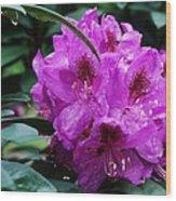 Purple Azalea Wood Print