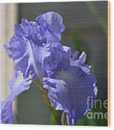 Purple Beauty Iris Wood Print