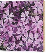 Purple Beauty Phlox Wood Print