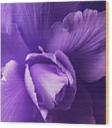 Purple Begonia Flower Wood Print