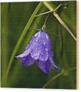 Purple Bell Wood Print