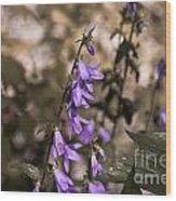 Purple Bells Wood Print