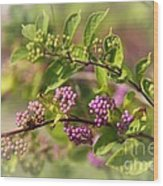 Purple Berries Wood Print