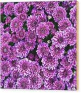 Purple Blanket Wood Print