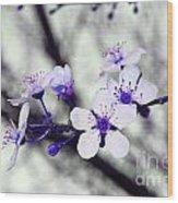 Purple Blossoms Wood Print