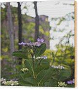 Purple Blossoms Lacecap Hydrangeas Wood Print
