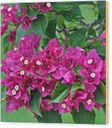 Purple Bougainvillea Wood Print