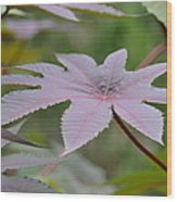 Purple By Nature II Wood Print