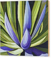 Purple Cactus Wood Print