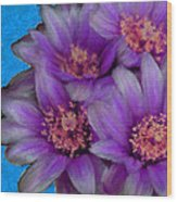 Purple Cactus Flowers Wood Print