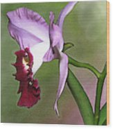 Purple Cattleya Orchid In Profile Wood Print