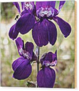 Purple Chinese Houses In Park Sierra-ca Wood Print