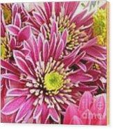 Purple Chrysanthemum Wood Print