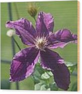 Purple Clemaits   # Wood Print