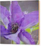 Purple Clematis Close Up Wood Print