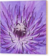 Purple Clematis Wood Print