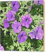 Petunias Purple Club Wood Print
