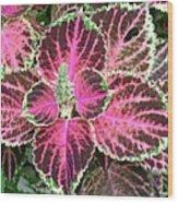 Purple Coleus With Seeds Wood Print