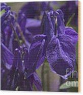 Purple Colimbine 1 Wood Print