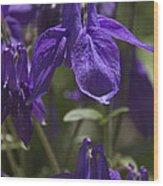 Purple Columbine 3 Wood Print