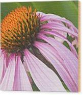 Purple Cone Flower Echinacea Wood Print