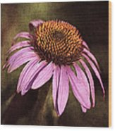 Purple Cone Flower II Wood Print