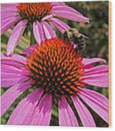 Purple Cone Flower With Bee Wood Print