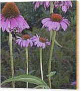 Purple Cone Flowers And Bee Wood Print