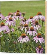 Purple Cone Flowers Wood Print