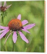 Purple Coneflower 8732 Wood Print